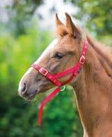 Foal Slip